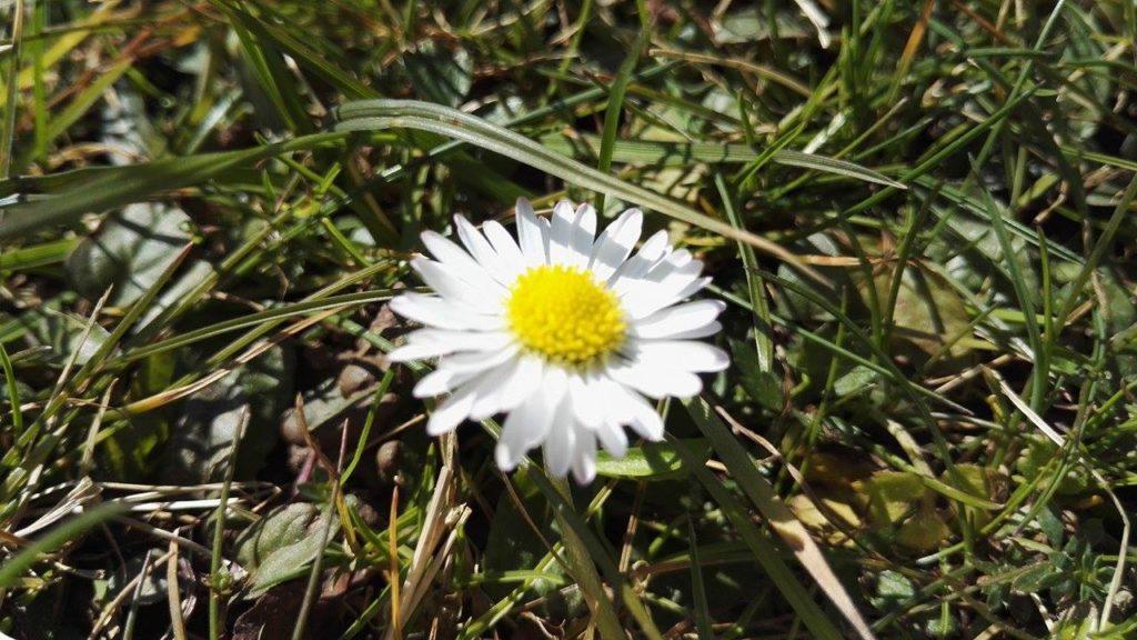 Meditationskurs Frühling